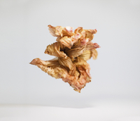 Close-up of dry flower over white background