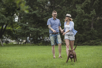 A young couple walking their Shar-pei/Staffordshire Terrier in a park