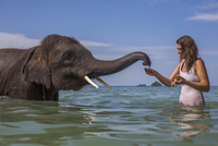 Mid adult woman feeding elephant in water