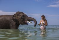 Happy woman feeding elephant in water