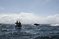Men in boat watching whale swimming in sea