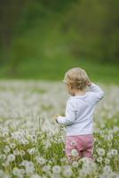 Rear view of toddler standing amidst dandelions in field 11016035388| 写真素材・ストックフォト・画像・イラスト素材|アマナイメージズ