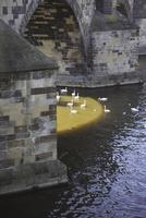Birds swimming in river under stone bridge 11016035400| 写真素材・ストックフォト・画像・イラスト素材|アマナイメージズ