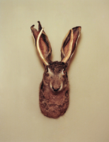 Jackalope hunting trophy mounted on wall