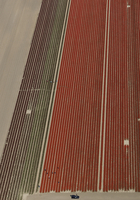 Distant view of crops in agricultural field, Hohenheim, Stuttgart, Baden-Wuerttemberg, Germany 11016035482| 写真素材・ストックフォト・画像・イラスト素材|アマナイメージズ