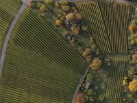 Full frame shot of vineyards in landscape during autumn, Stuttgart, Baden-Wuerttemberg, Germany
