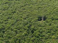 Full frame shot of trees growing in forest 11016035507  写真素材・ストックフォト・画像・イラスト素材 アマナイメージズ