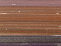 Full frame shot of crops in agricultural landscape, Stuttgart, Baden-Wuerttemberg, Germany