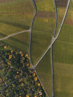 Aerial view of crops in agricultural field during autumn, Stuttgart, Baden-Wuerttemberg, Germany