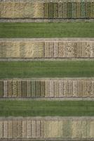 Full frame aerial view of crops in agricultural landscape, Stuttgart, Baden-Wuerttemberg, Germany