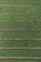Full frame aerial view of crops growing in field
