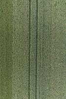Full frame aerial view of crops growing in field, Stuttgart, Baden-Wuerttemberg, Germany 11016035532| 写真素材・ストックフォト・画像・イラスト素材|アマナイメージズ