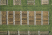 Full frame aerial view of crops in agricultural landscape, Stuttgart, Baden-Wuerttemberg, Germany 11016035533| 写真素材・ストックフォト・画像・イラスト素材|アマナイメージズ