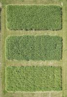 Full frame aerial view of crops growing in field, Stuttgart, Baden-Wuerttemberg, Germany 11016035536| 写真素材・ストックフォト・画像・イラスト素材|アマナイメージズ