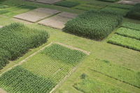 High angle view of agricultural field, Stuttgart, Baden-Wuerttemberg, Germany