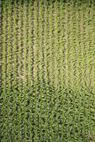 Full frame aerial view of crops in agricultural landscape 11016035543| 写真素材・ストックフォト・画像・イラスト素材|アマナイメージズ