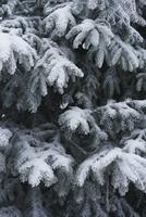 Full frame shot of snow covered pine trees 11016035720  写真素材・ストックフォト・画像・イラスト素材 アマナイメージズ
