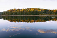 Scenic view of autumn trees nu calm lake