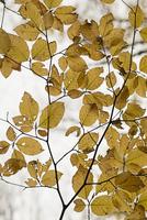 Full frame shot of dry leaves 11016035794| 写真素材・ストックフォト・画像・イラスト素材|アマナイメージズ