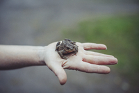 Cropped image of hand holding frog