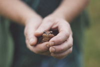 Close-up of hands holding frog