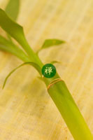 竹 11017000737| 写真素材・ストックフォト・画像・イラスト素材|アマナイメージズ