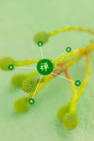 緑の花と和のイメージ 11017000742| 写真素材・ストックフォト・画像・イラスト素材|アマナイメージズ
