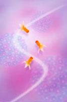 3匹の金魚 11017000769| 写真素材・ストックフォト・画像・イラスト素材|アマナイメージズ