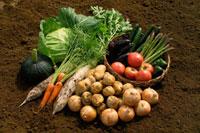 収穫野菜の集合