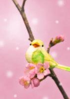 梅の花と小鳥