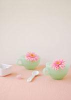 グリーンのティーカップに飾ったピンクのガーベラの花 11017002228  写真素材・ストックフォト・画像・イラスト素材 アマナイメージズ