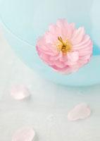 水色のガラスボールに飾った八重桜と花びら