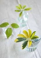 麻布の上のグラスに入れたグリーンの葉っぱ 11017002456| 写真素材・ストックフォト・画像・イラスト素材|アマナイメージズ