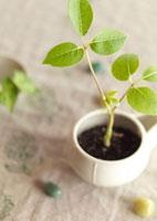 白い器に植えたグリーンの観葉植物とストーン