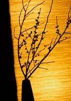 花瓶に入れた木の枝のシルエット 11017002571| 写真素材・ストックフォト・画像・イラスト素材|アマナイメージズ