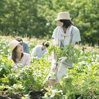 野菜の収穫をする若者たち 11017005790| 写真素材・ストックフォト・画像・イラスト素材|アマナイメージズ