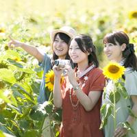 ひまわり畑で微笑む3人の女性 11017005793| 写真素材・ストックフォト・画像・イラスト素材|アマナイメージズ