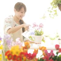 花の手入れをする花屋の店員 11017006274| 写真素材・ストックフォト・画像・イラスト素材|アマナイメージズ