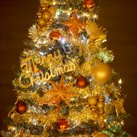 クリスマスツリー 11017015524  写真素材・ストックフォト・画像・イラスト素材 アマナイメージズ