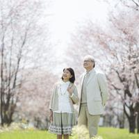 桜を眺めるシニア夫婦