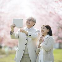 タブレットで桜の写真を撮るシニア夫婦