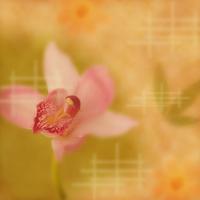 東洋の花のイメージ