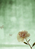 芍薬の花のオリエンタルイメージ