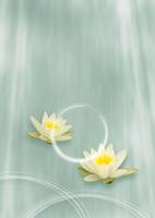蓮の花のオリエンタルイメージ 11017018344| 写真素材・ストックフォト・画像・イラスト素材|アマナイメージズ