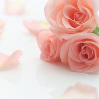 テーブルに置かれたバラ