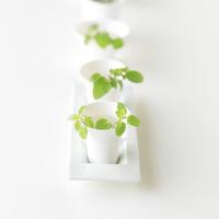 白いテーブルの上の白い食器に飾ったハーブ