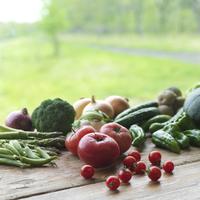 テーブルの上の採れたて野菜の集合