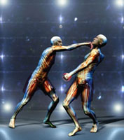 Multi-ethnic anatomical men boxing