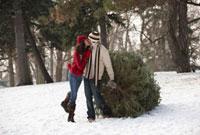 Couple kissing and pulling Christmas tree in woods 11018034192  写真素材・ストックフォト・画像・イラスト素材 アマナイメージズ