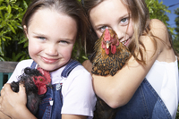 Mixed race girls holding chickens on farm